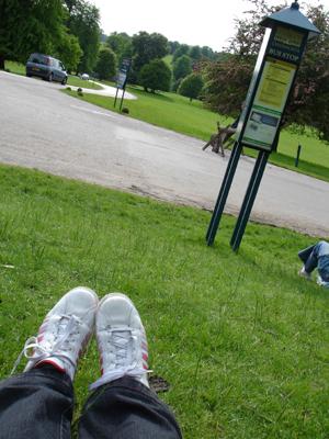 坐在 Chatsworth House 門外,等待開往 Hathersage 的巴士
